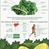 kale-facts