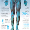Graphic: importance of water in diet