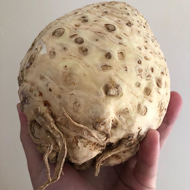 Celeriac or celery root